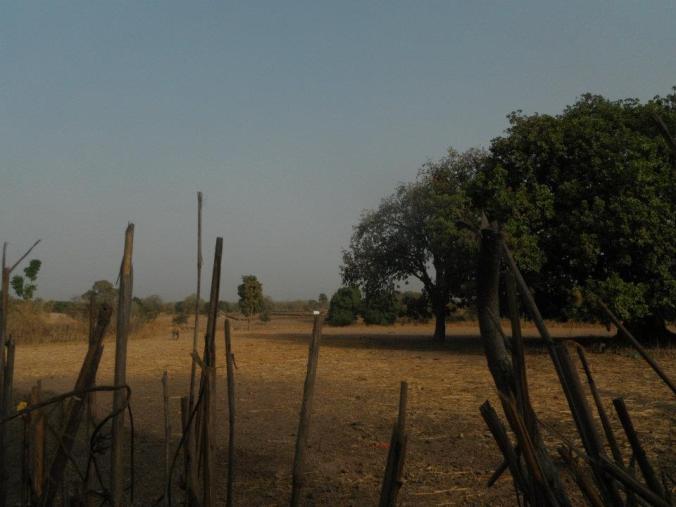 corn field outside hut